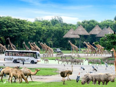 Safariworld05