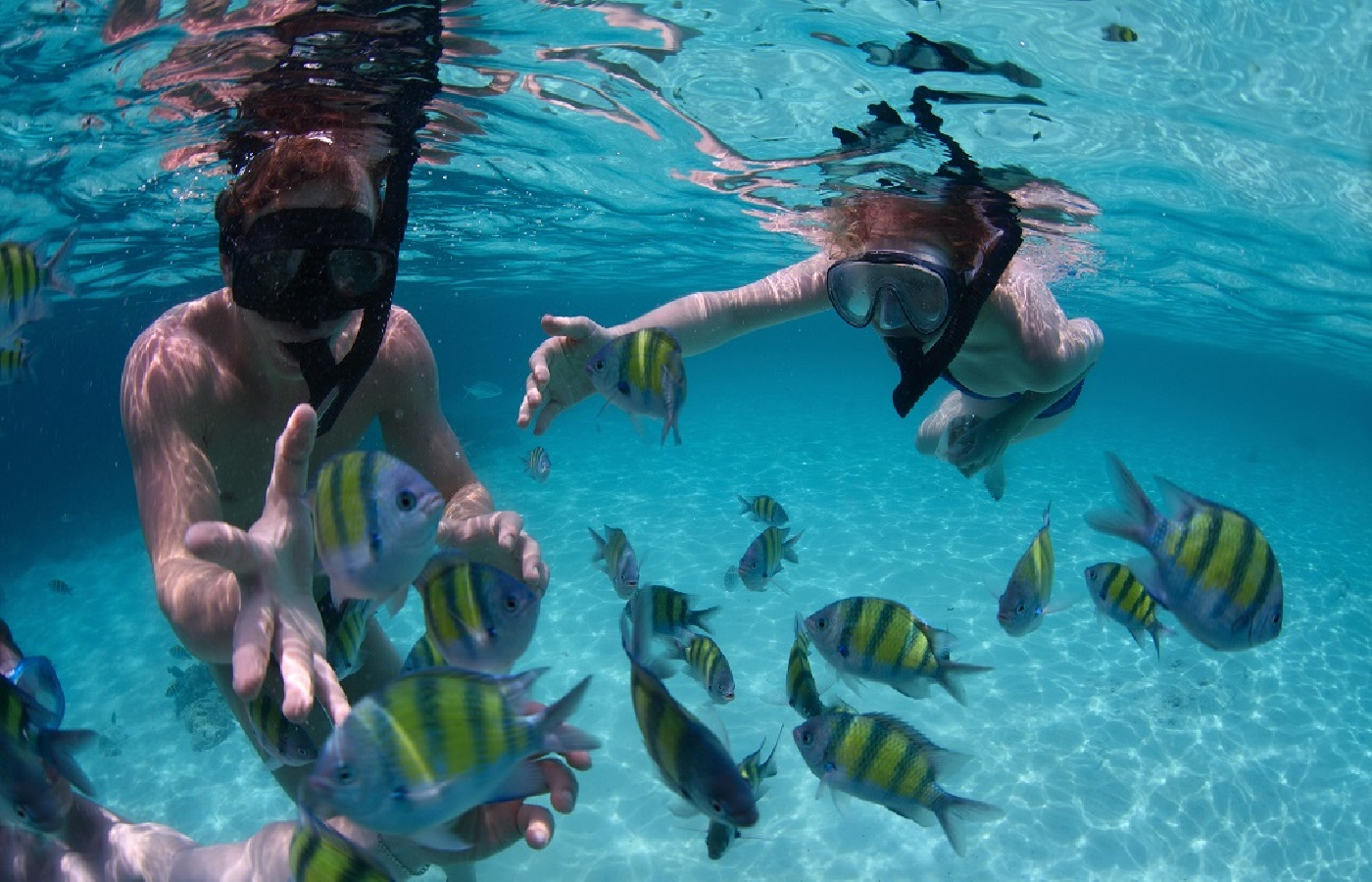 51273bcb193cfkoh tao snorkeling