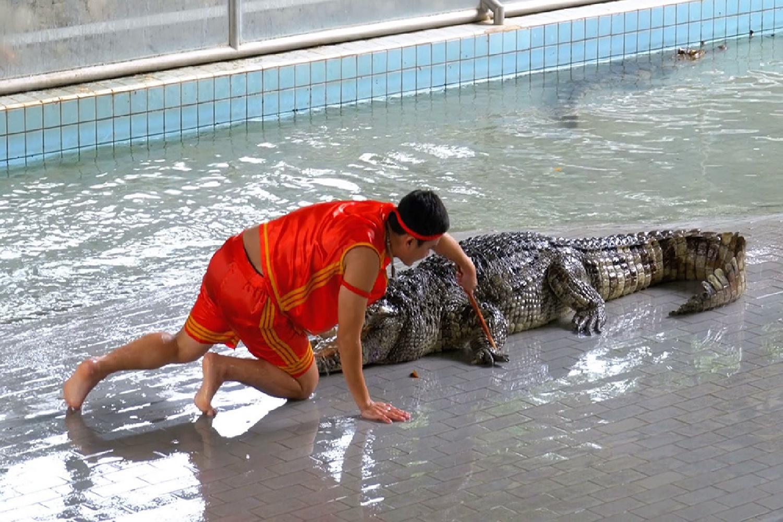 Crocodile Farm Million Year Stone 01