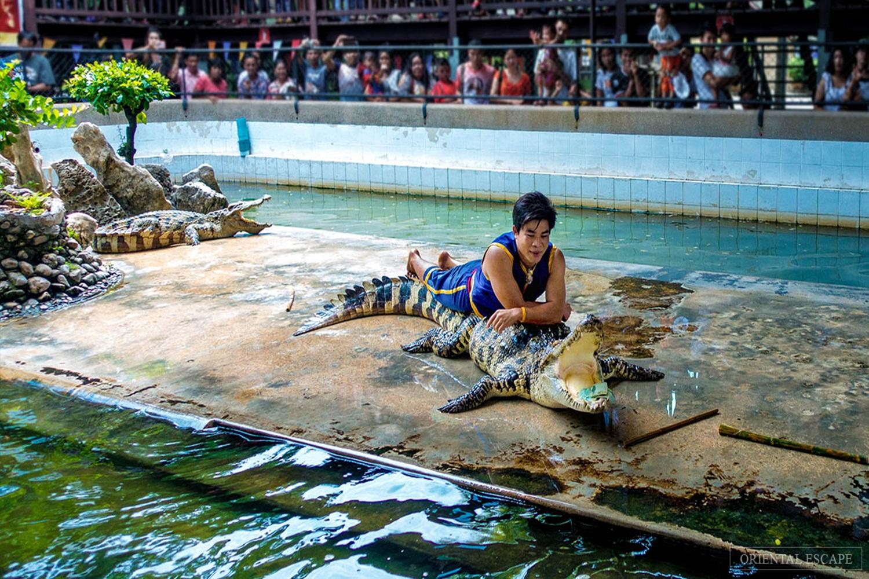 Crocodile04