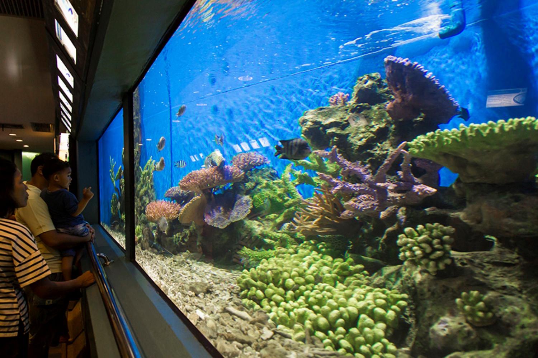 7 Rayong Aquarium