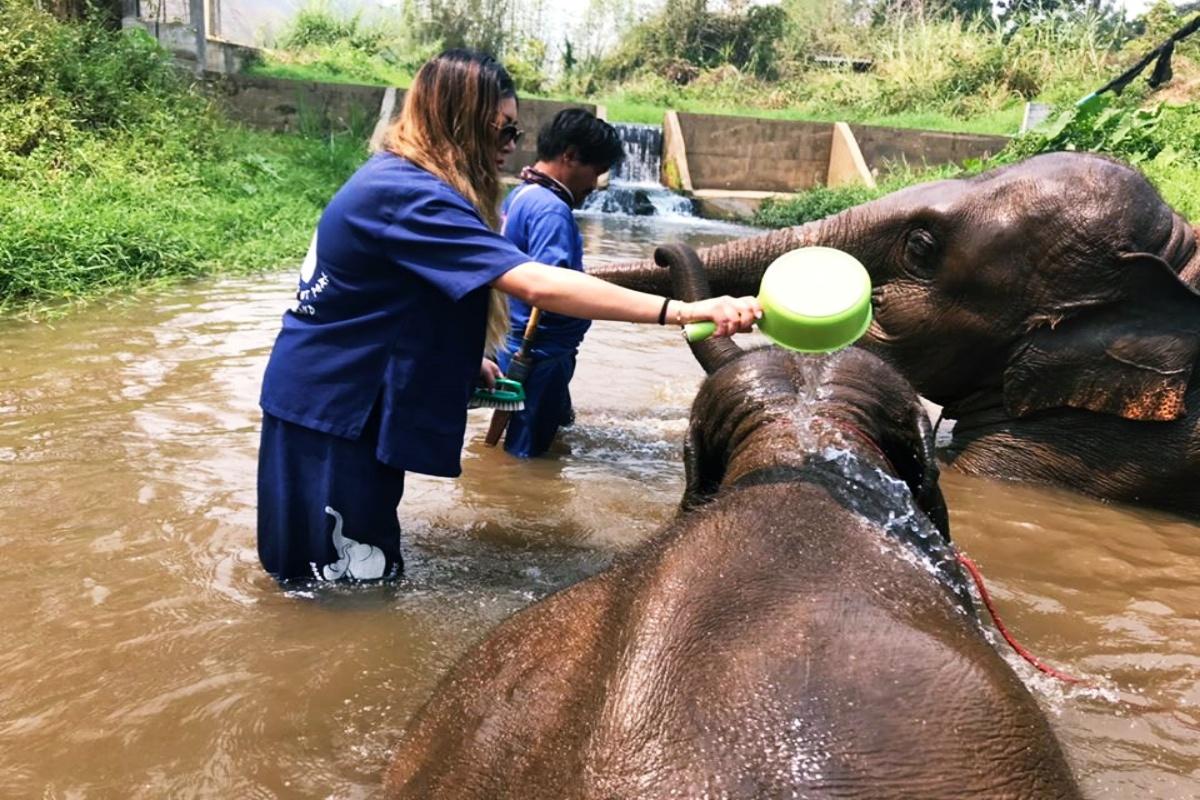 Baan Chang Elephant Park 7