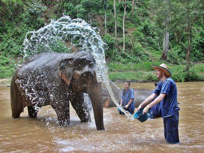 Elephant Care 12