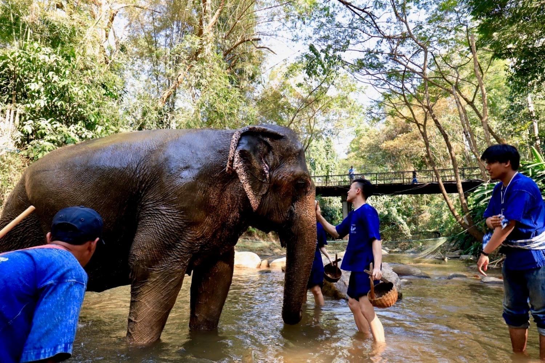 Elephant Care Center 3