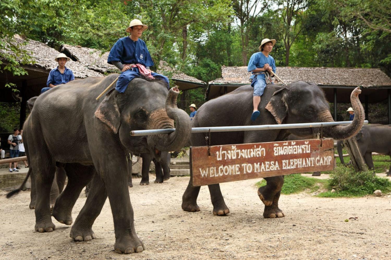 Elephant Care Center 4