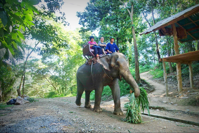 Elephant Care Center 6