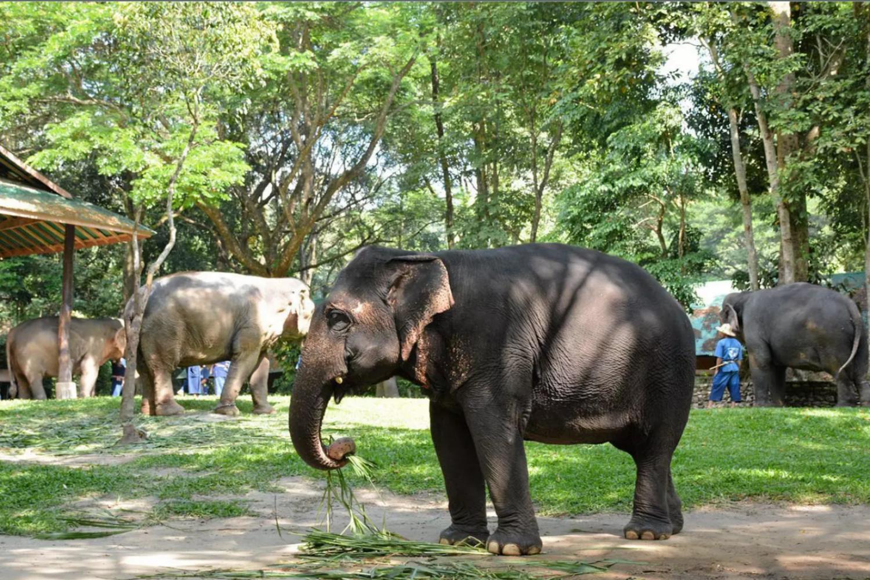 Elephant Care Center 8