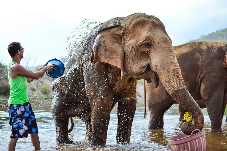 Elephant Nature Park 4