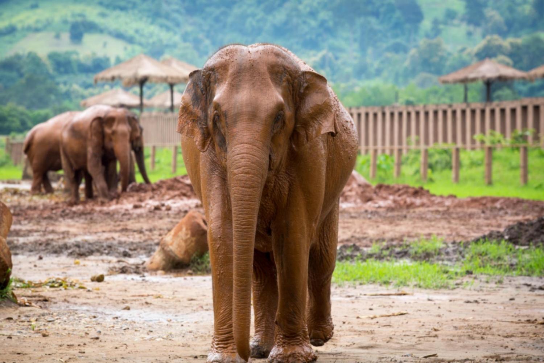 Elephant Nature Park 7