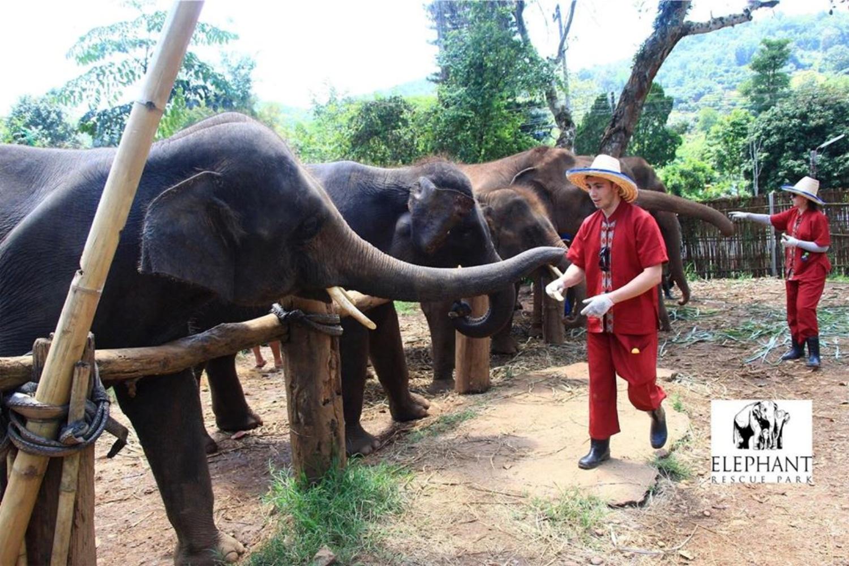 Elephant Rescue Park 2