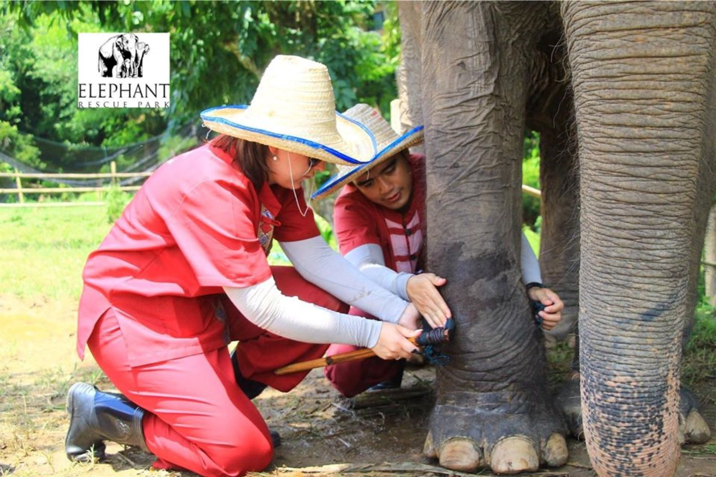 Elephant Rescue Park 3