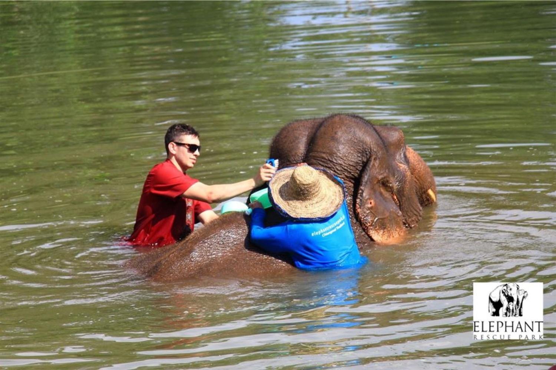 Elephant Rescue Park 4