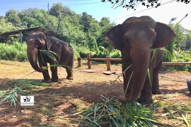Elephant Rescue Park 6