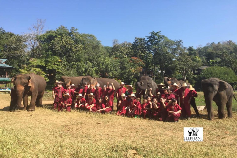 Elephant Rescue Park 7