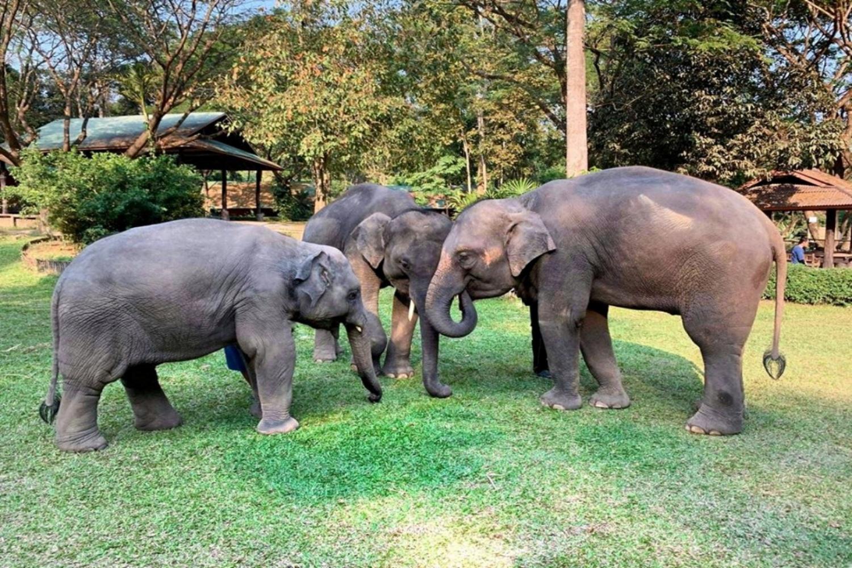 Mae Sa Elephant Camp 2 1