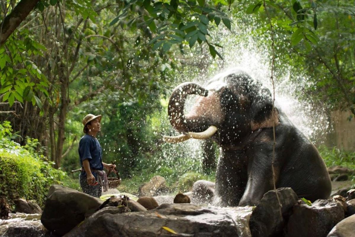 Mae Sa Elephant Camp 2