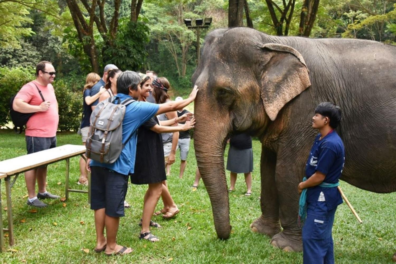 Mae Sa Elephant Camp 3 1