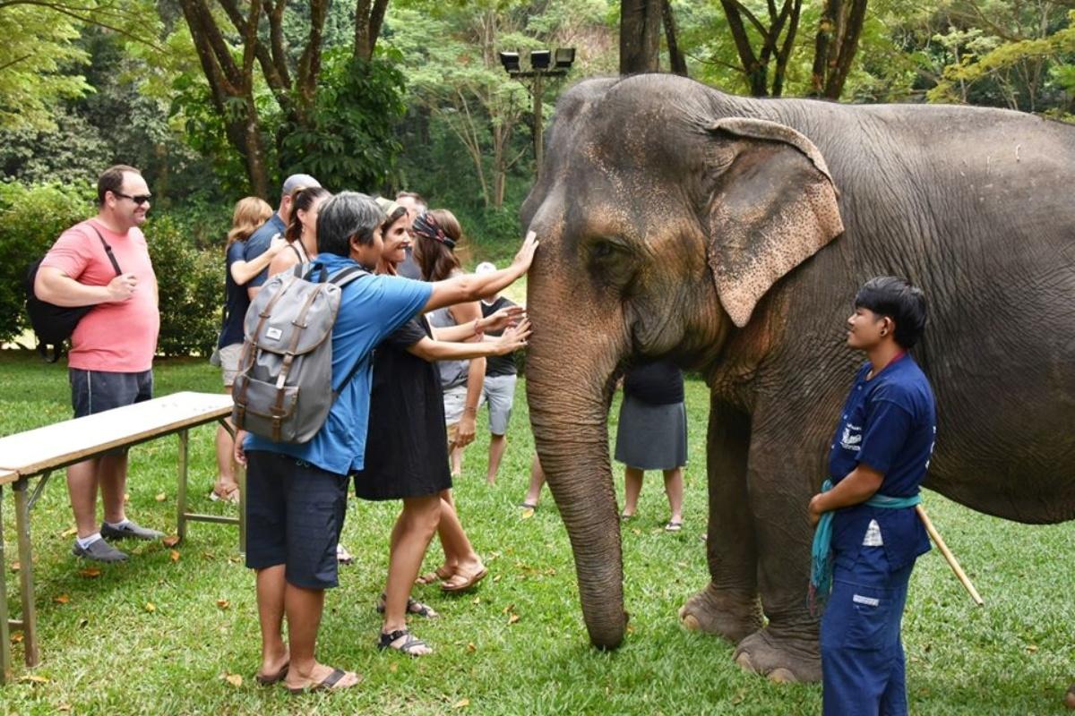 Mae Sa Elephant Camp 3