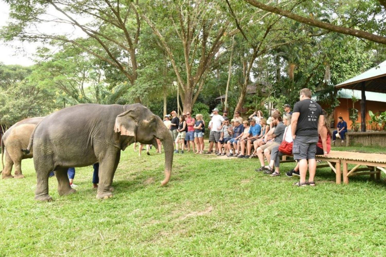 Mae Sa Elephant Camp 4 1