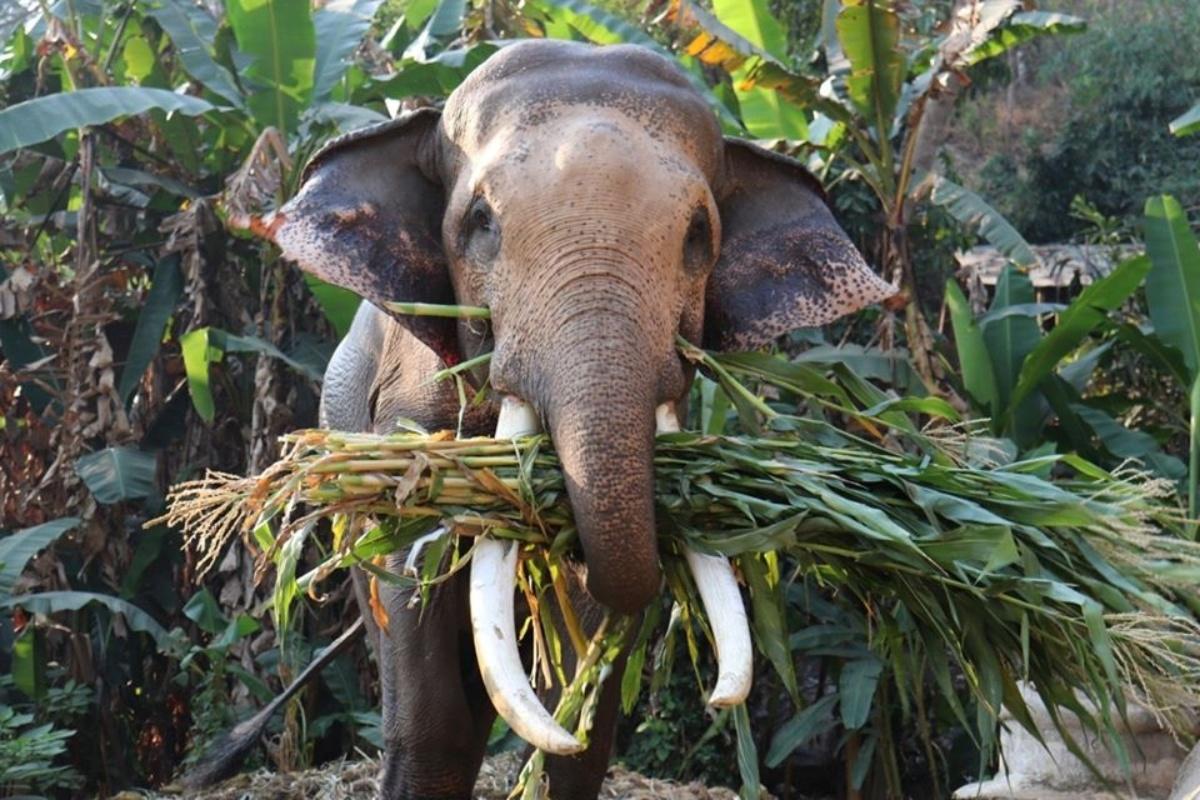 Mae Sa Elephant Camp 5