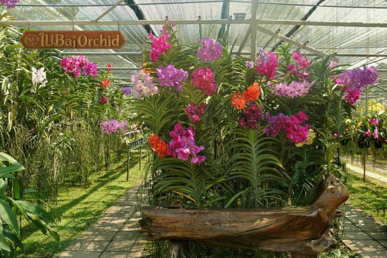 Orchid Farm 5