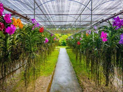 Orchid Farm 6