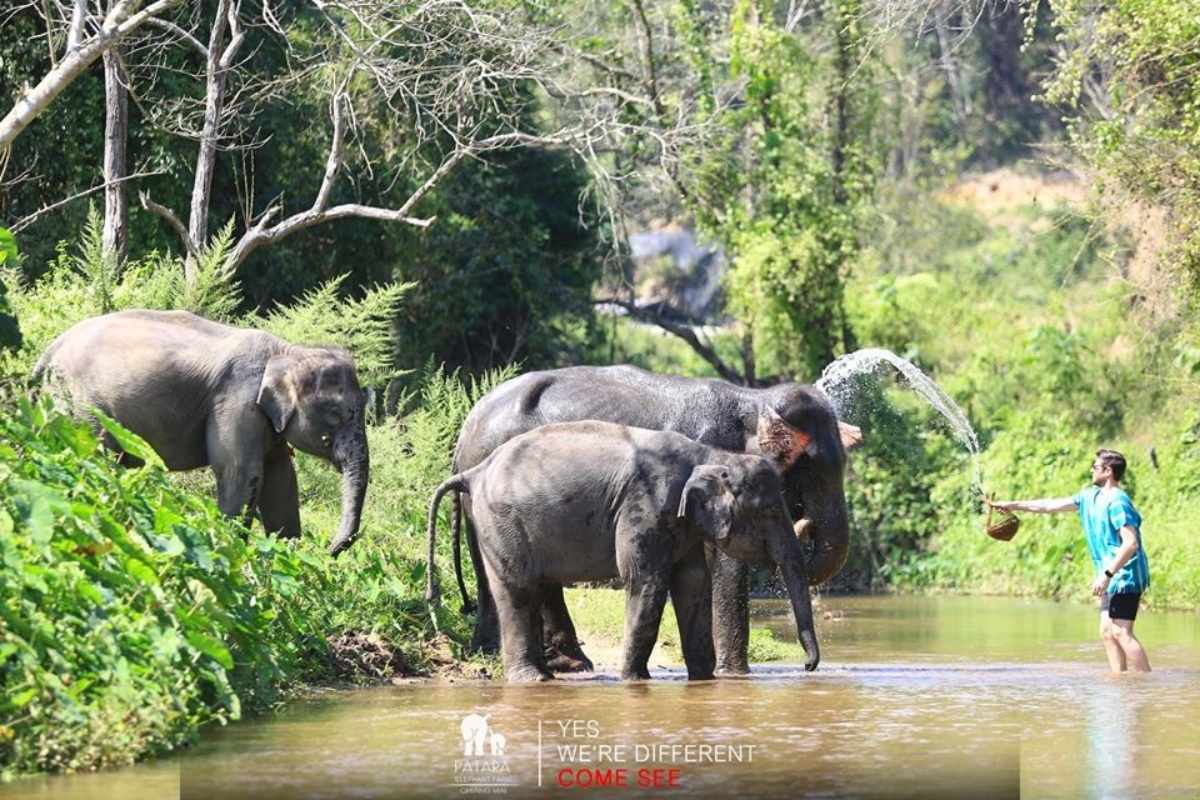Patara Elephant Farm 2