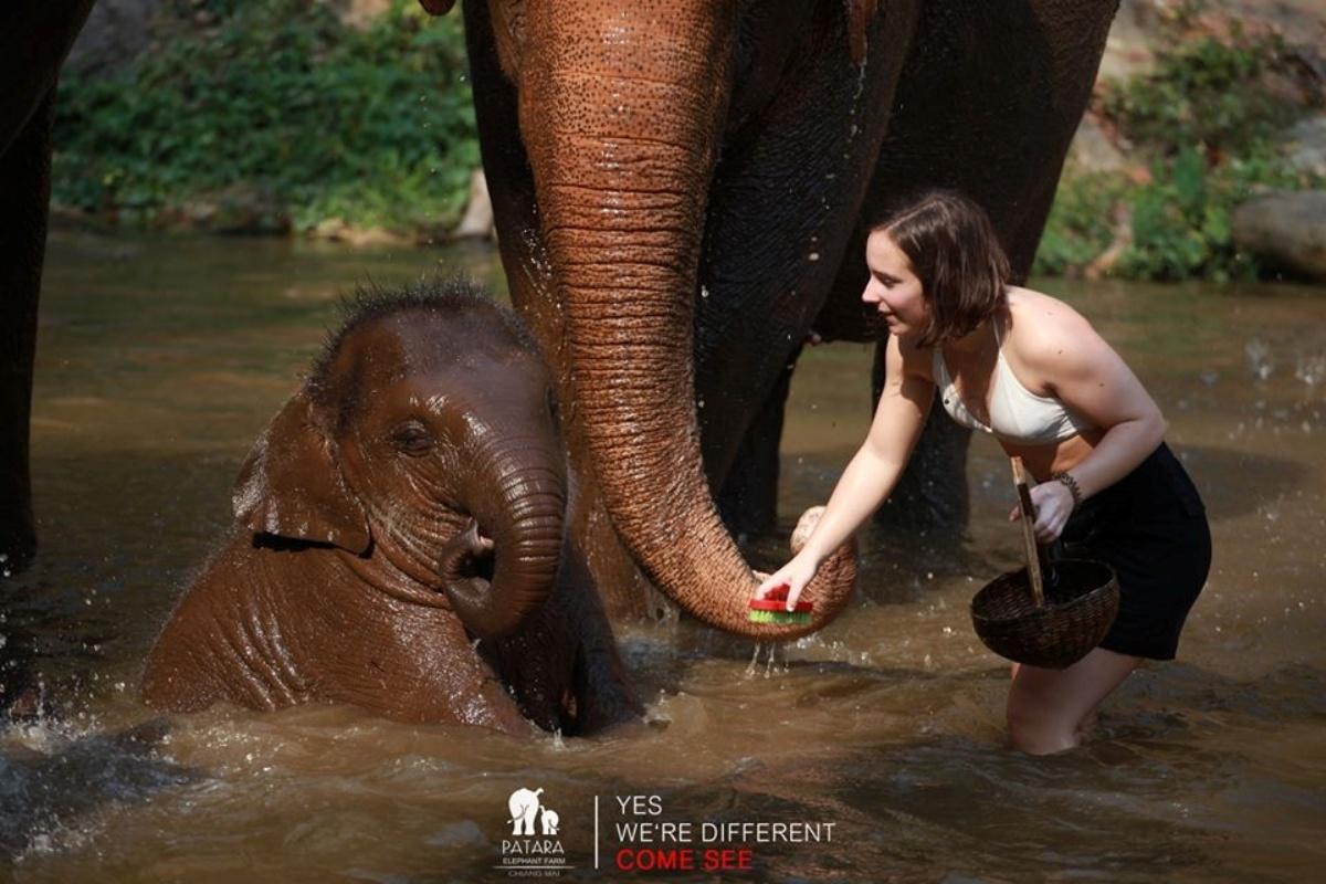 Patara Elephant Farm 7