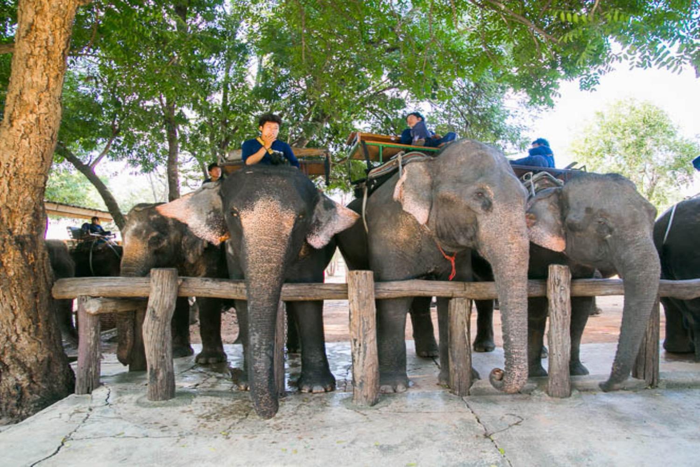 elephant camp01